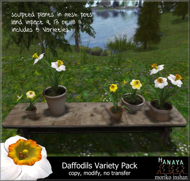 Hanaya-Daffodils-Variety-Pack