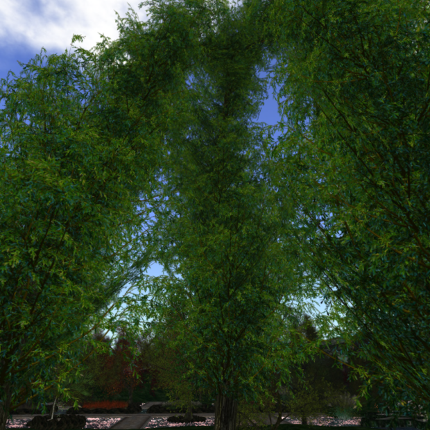 Arch Trees 4