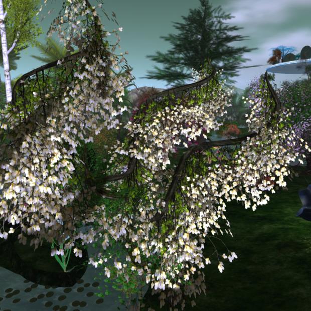 Hayabusa Design new Magnolia with Wind effect 2