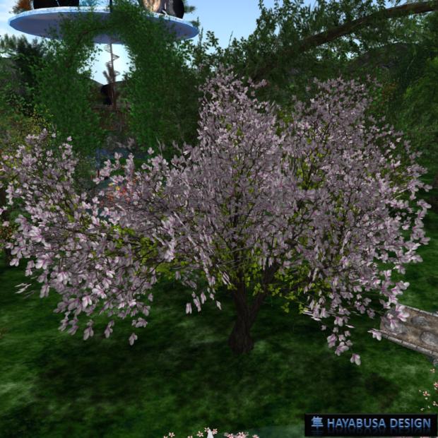 Hayabusa Design new Magnolia with Wind effect