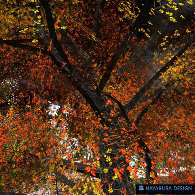Hayabusa Design Autumn 2014 - 1