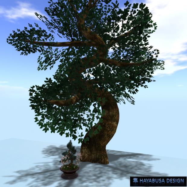 Hayabusa Design Bonzai with it Tree 3