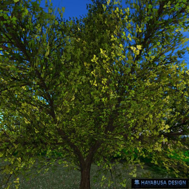 Hayabusa Design - Prunus Serrulata Japonica - 5